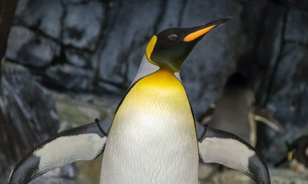 10 motivi per provare Linux